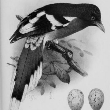 Watch the Birdie! Bird Spotting – sharing our heritage from Bruce Castle Museum & Archive